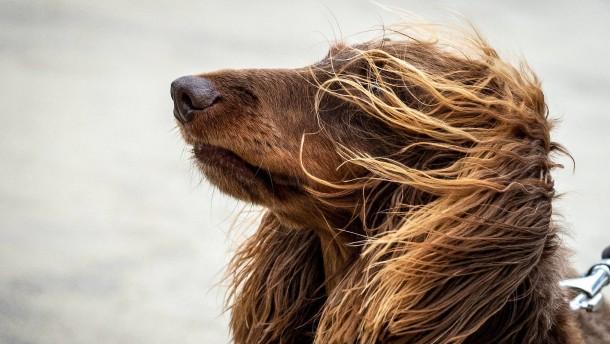 Schärfere Regeln für Hundehalter geplant