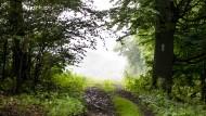 Naturschutz vs. Tourismus: Der Wald ist voll