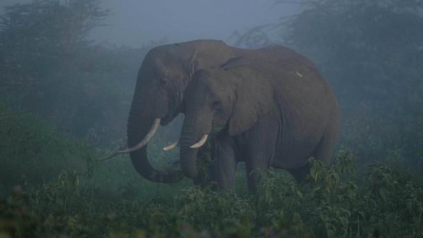 Kenias Elefanten in Bedrängnis