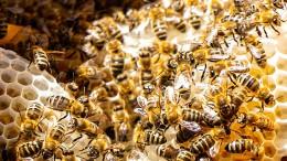 Sperrbezirk soll Bienen schützen