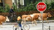 Viele Menschen verzichten auf Fleisch – vor allem wegen des Klimawandels.