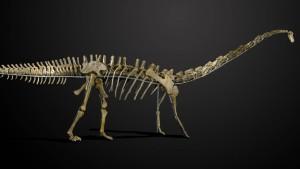 Dinosaurier-Skelett für 480.000 Euro versteigert