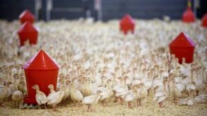 Den Menschen fehlt einfach das Geld fürs Bio-Huhn