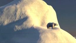 Diese Tierarten sind vom Aussterben bedroht