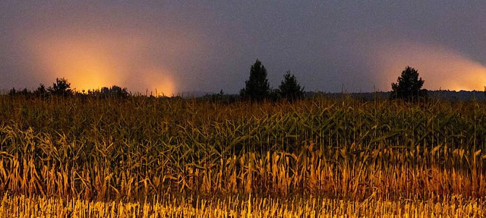 Der Waldbrand in Brandenburg erhellt den Nachthimmel.