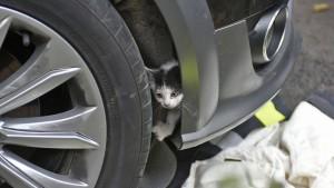 Babykatze fährt 150 Kilometer hinter Stoßstange von Auto mit