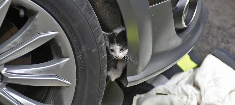 Mit Hilfe der Feuerwehr schaffte die kleine Katze es zurück ins Freie.