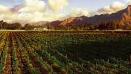 Etwas Gutes tun – und Wein verkaufen