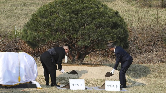 Koreas Baum der Hoffnung
