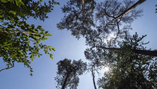 Sorge um den Stadtwald