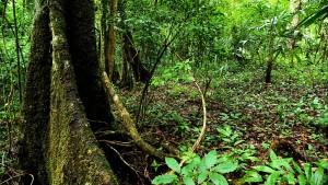 Die schicksalhaften Wälder