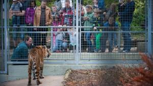 Wenn für Tiger ein neues Leben beginnt