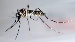 Eiweißkristalle gegen Tigermücken