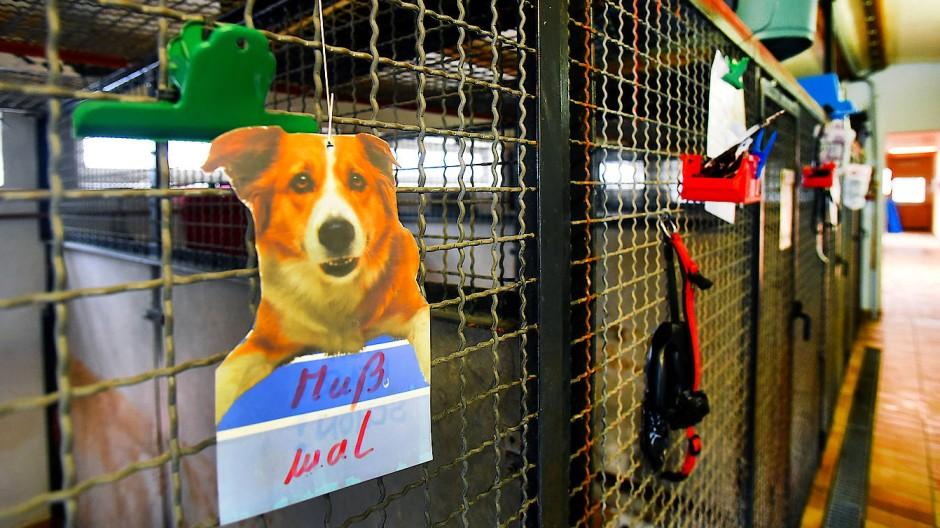 Bewegungsdrang: Die Schilder an den Zwingern sind Hinweise für die Gassigeher, welcher Hund noch keine Runde gedreht hat.