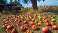 Platzreife: Auf Streuobstwiesen liegt im Herbst jede Menge Fallobst herum. Daran bedienen darf man sich trotzdem nicht ohne Weiteres.