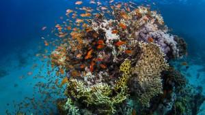 Steht das Great Barrier Reef vor dem Kollaps?