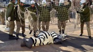 Was tun beim Ausbruch eines Zebras?