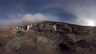 Heimat der Pinguine
