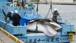 Japans Walfänger stechen wieder in See