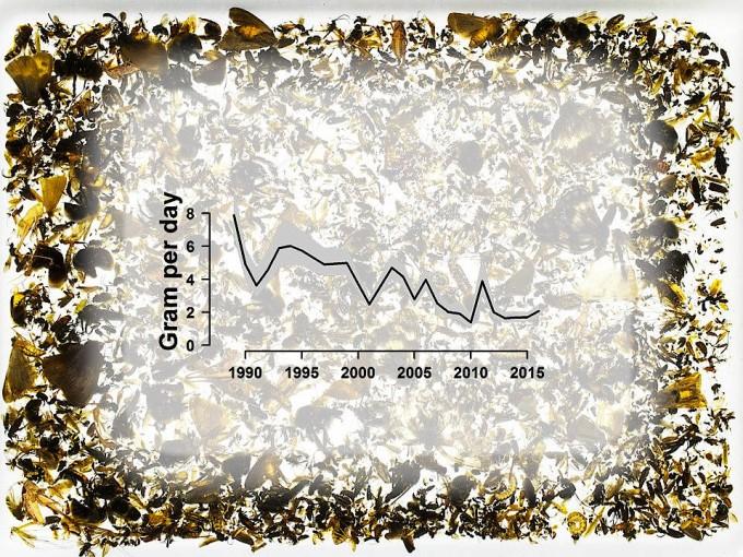 Das mittlere Gewicht der pro Tag gefangenen Insekten hat seit 1989 um mehr als 75 Prozent abgenommen.