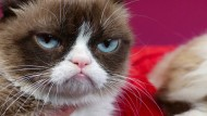 """Dieses Gesicht spricht Bände: """"Grumpy Cat"""" auf einer Aufnahme aus dem Jahr 2015."""