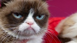 """Grumpy Cat"" ist tot"