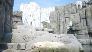 Eine Eisbombe für die Bären