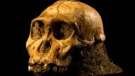 Vergesst Lucy! Die südafrikanischen Hominiden, wie hier Australopithecus sediba, standen uns offenbar deutlich näher.