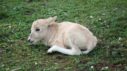 Freude über seltenen Antilopen-Nachwuchs im Zoo