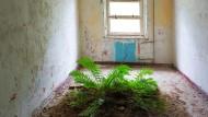 Zimmerpflanze inklusive: Wer ein Objekt ersteigert, bekommt manche Überraschung mit dazu.