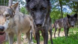Managementseminare mit Wölfen: Im Käfig sind alle gleich