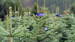 Wie nachhaltig ist der Weihnachtsbaum?