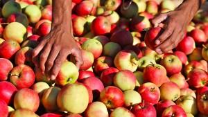 Kein Schadensausgleich mehr für Winzer und Obstbauern
