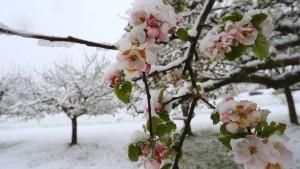 Wintereinbruch im Süden Deutschlands