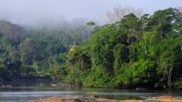 VR-Reisen durch den Amazonas-Regenwald
