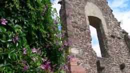 Eine Burg als Pflanzgarten