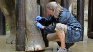 Ein neues Gesetz zur Regelung von Tierarzneien vergisst Zootiere