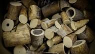 In China soll ab 2017 nicht mehr mit Elfenbein gehandelt werden