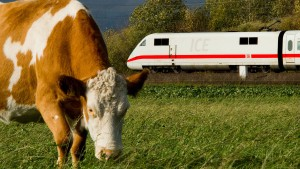 Kuh legt Bahnverkehr zwischen Kassel und Würzburg lahm