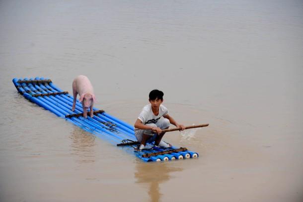 20. August 2014. Schwein gehabt! Ein Junge bringt sich und ein Schwein vor Überflutungen in der Provinz Zhejiang im Osten Chinas in Sicherheit.