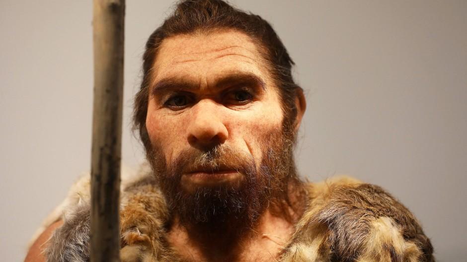 So oder so ähnlich sah damals vielleicht ein Vater aus: Rekonstruktion eines Neandertalers für das LVR-Landesmuseum in Bonn