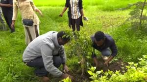Äthiopien pflanzt 350 Millionen Bäume