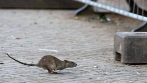 Ratten legen Online-Bürgerdienste in Estland lahm