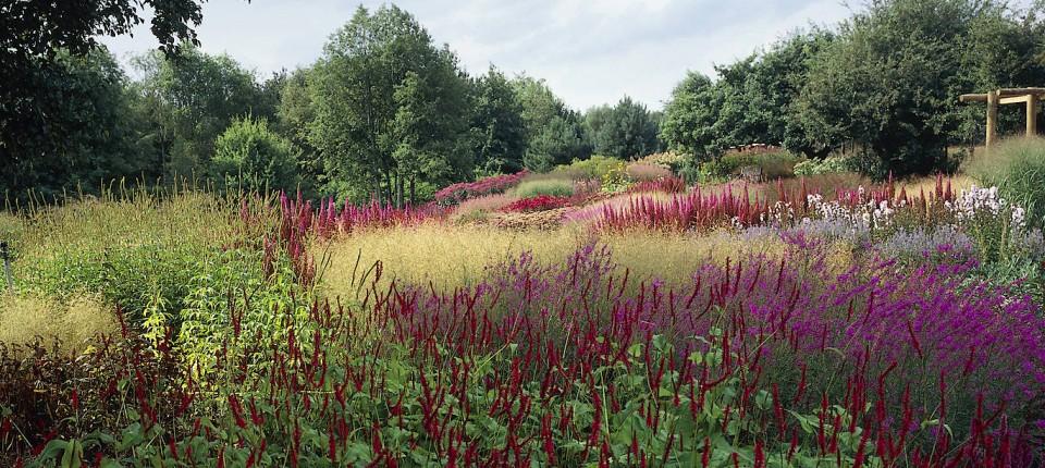 Pflegeleichte Gärten: Die Wahl Der Richtigen Pflanzen
