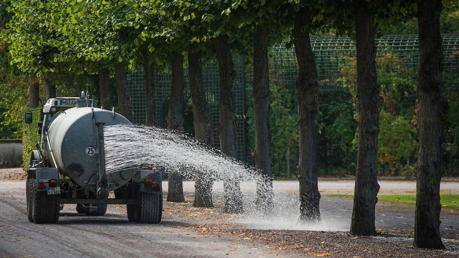 Im Schwetzinger Schlossgarten spürt man die Folgen des Klimawandels.