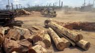 Abholzen in Südamerika: Brasiliens Regenwald wird zunehmend kleiner.