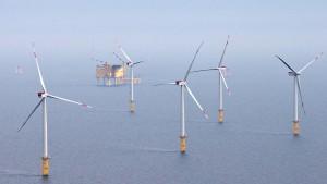Vertreibt Windpark-Bau vor Sylt Schweinswale?