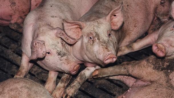 Die vielen Lücken des Tierschutzrechts