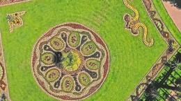 Blühender Teppich