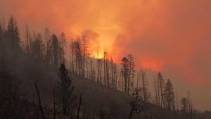 Der verzweifelte Kampf gegen die Flammen